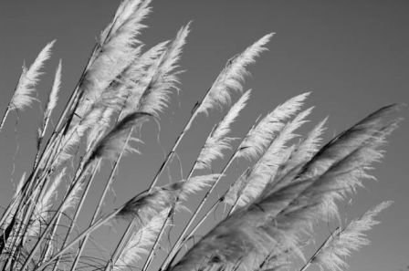 Plumes 7